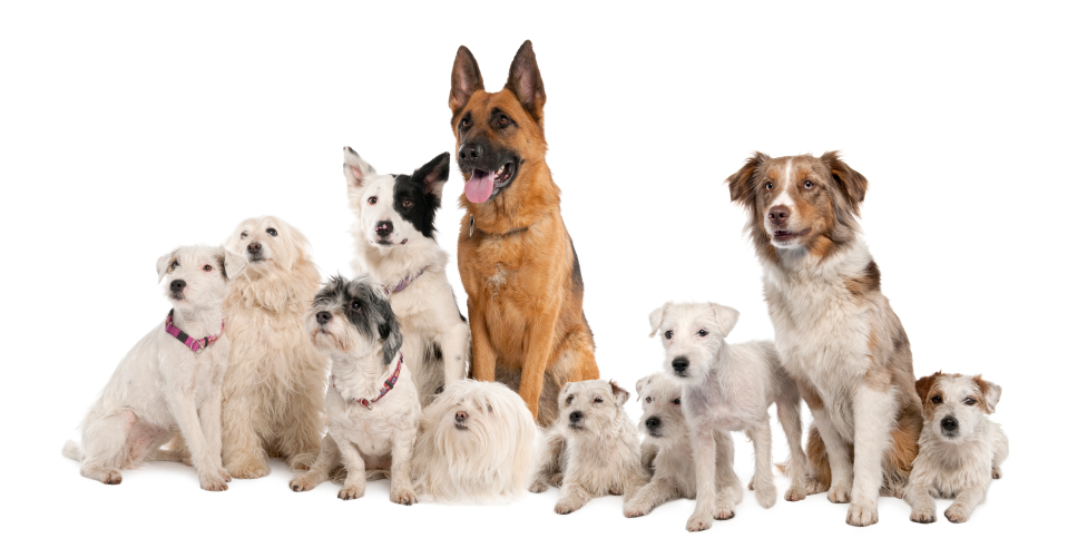 Dog Behaviorists Long Island