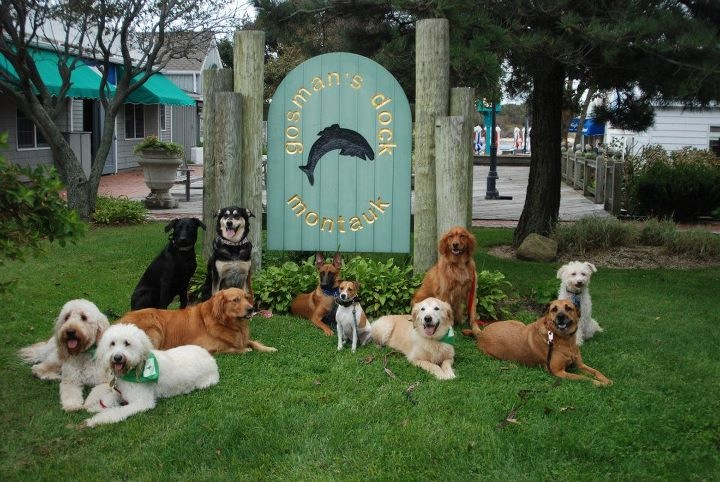Suffolk County Dog Training